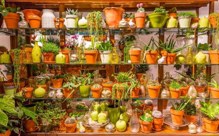 Interieurfoto van een bloemenwinkel